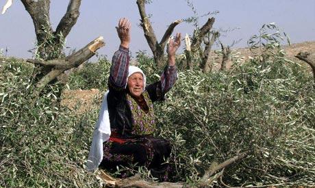 Destroyed olive groves
