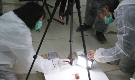 examination of a sample (Photo Khaled El-Fiqi)