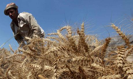 UN raises alarm over global food prices