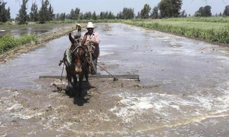 rice crew business sweetening