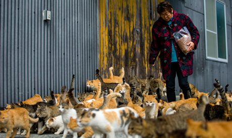 Cats crowd around village nurse and Ozu city official Atsuko Ogata