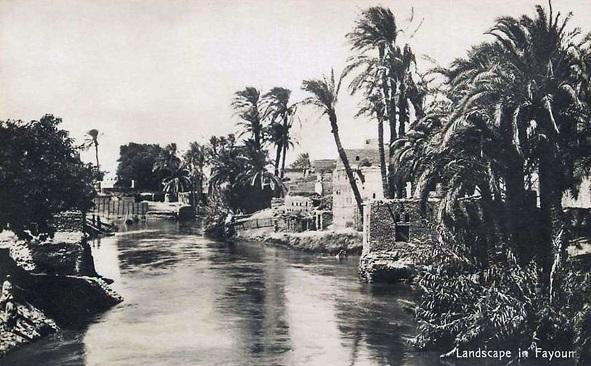 Fayoum2