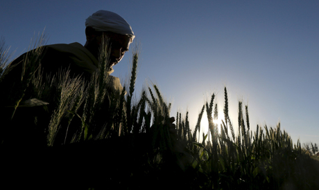 A farmer tends to a wheat farm in the El-Dakahlia governorate, north of Cairo, Egypt, February 16, 2