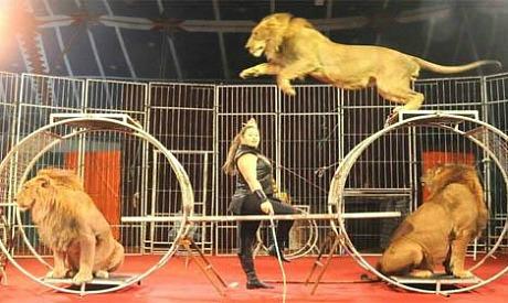 National Circus