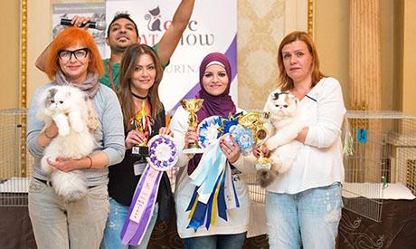Cairo Cat show