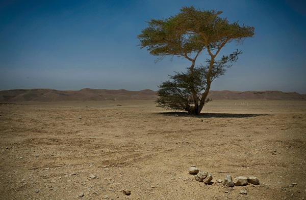 Wadi Sannur