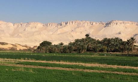 El-Wadi El-Gadid. (Photo: Doaa El-Bey)