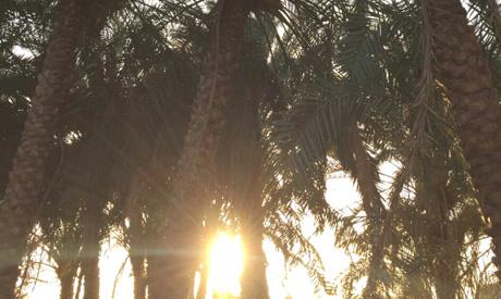 Al-Dakhla Oasis