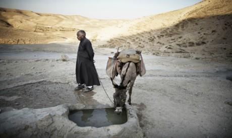 Palestinian herdsman
