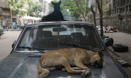 Strays dogs in Egypt
