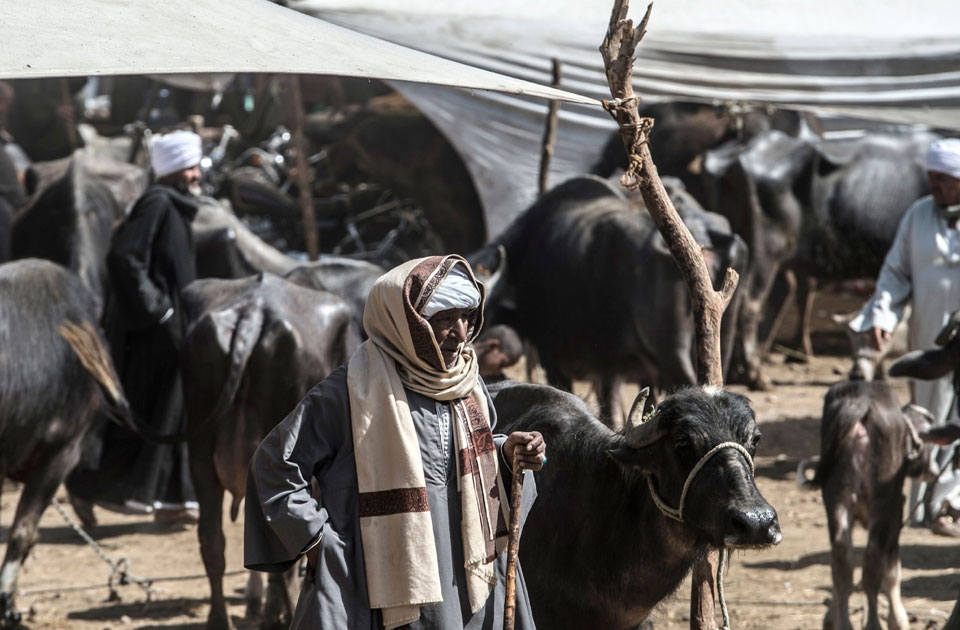 PHOTO GALLERY: Cattle traders gather at a livestock market