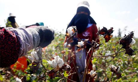 Balancing the cotton market