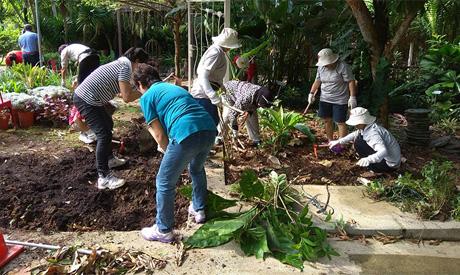gardening in singapore