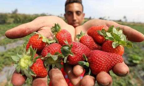 Egyptian strawberries
