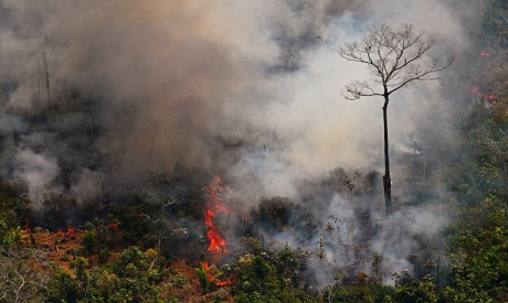 Norway says EFTA-Mercosur pact has guarantees on Amazon forests