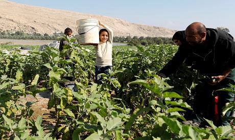 Palestinians Farmers
