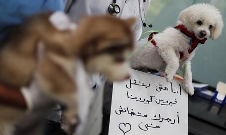 HEALTH-CORONAVIRUS/EGYPT-ANIMALS