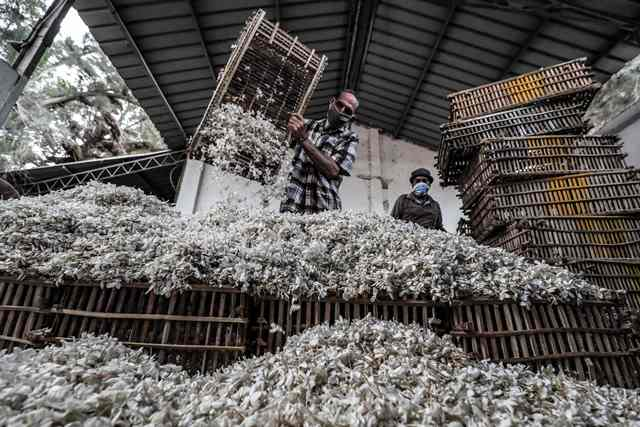Workers unload baskets filled with harvested jasmine flowers at a warehouse in the village of Shubra