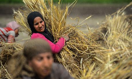 Wheat harvest a success