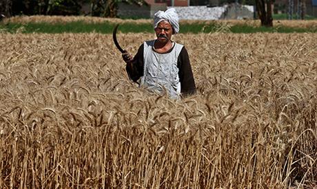 Egypt's wheat
