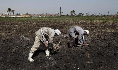 Higher fees on fertiliser exports
