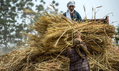 A better wheat season